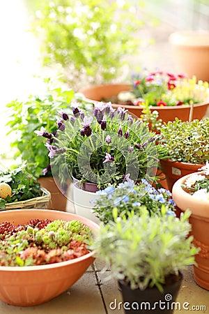 Free Flower Pots Stock Image - 24170501