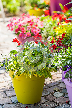 Free Flower Pots Royalty Free Stock Photography - 57196857