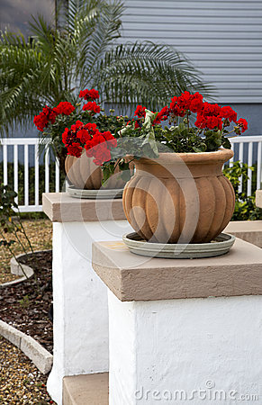 Flower Pots And Flowers