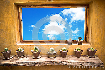 Flower pots with variety on the window