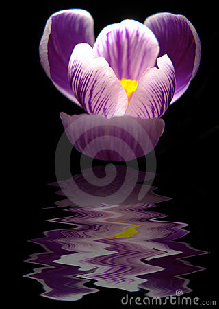 Flower reflection