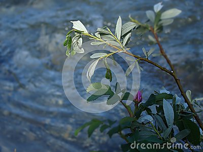 Flower On Riverbed