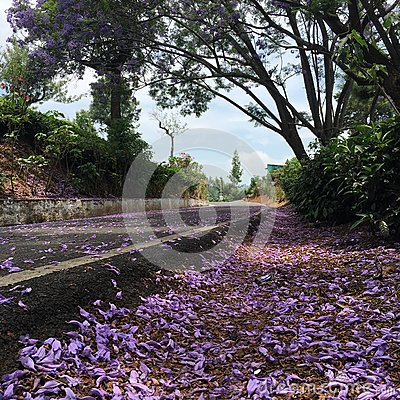 Free Flower Road Royalty Free Stock Photos - 71701608