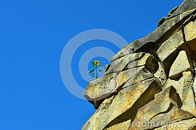 Flower on the rocks