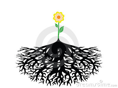 Flower with root isolated