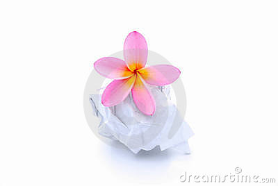 Flower On Rumpled Paper Ball Royalty Free Stock Image - Image: 13257096