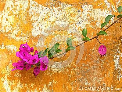 Flower on a rusty wall
