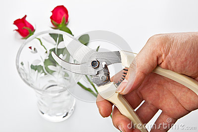 Flower scissors in hand
