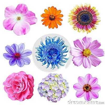 Free Flower Set Royalty Free Stock Image - 11146746