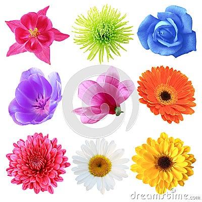 Free Flower Set Royalty Free Stock Photos - 5525808