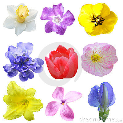 Free Flower Set Stock Photography - 5554162