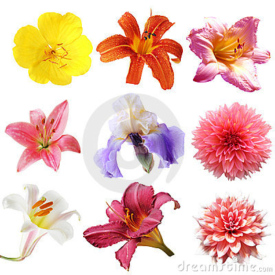 Free Flower Set Stock Photos - 5758033