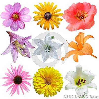 Free Flower Set Stock Photos - 6071713