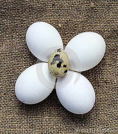 Free Flower-shaped Chicken Eggs And Quail Eggs.White Chicken Eggs And Quail Eggs Stand Side By Side On A Wooden Floor Royalty Free Stock Images - 105765409