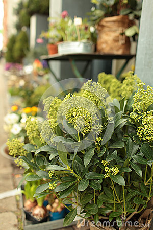 Flower Shop Stock Images - Image: 25322424