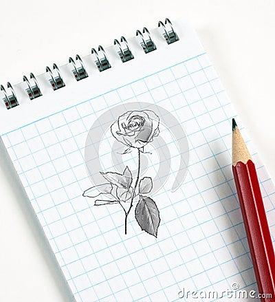 Flower sketch in pencil