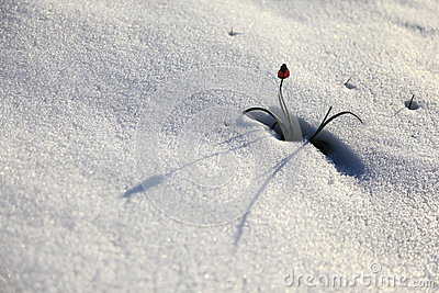 Flower and snow