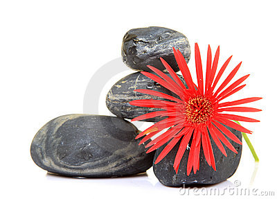 Flower and spa stones