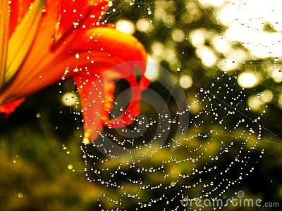 Flower and Spider Web