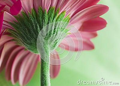 Flower stem macro