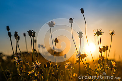 Flower at sunrise with colorful sky
