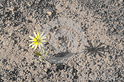 Flower surviving drought