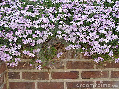 Flower Topped Wall