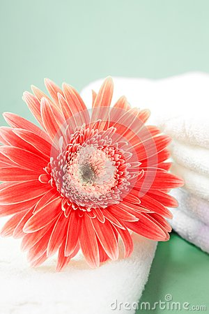 Flower and towel