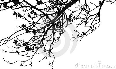 Flower Tree Branches