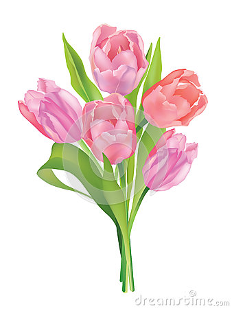 Flower tulip bouquet isolated on white background