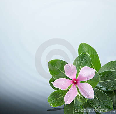 Flower and water ripple