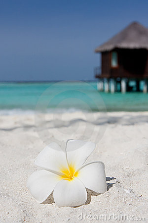 Flower on a white sandy beach