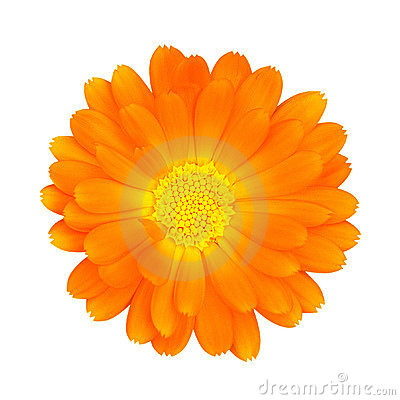 Free Flower With Clipping Path Stock Images - 2482204