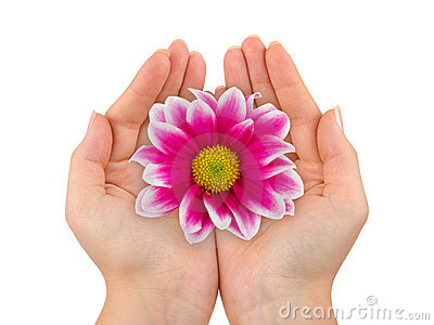 Flower in woman hands