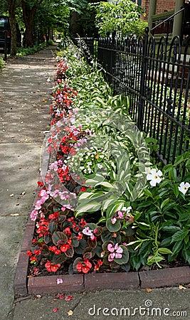 Flowerbed Along Sidewalk