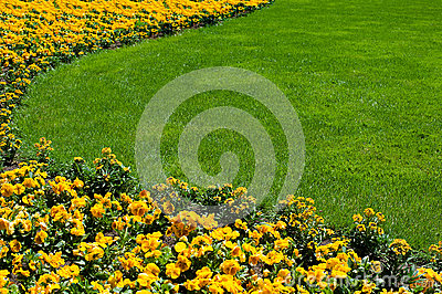 Flowerbed and lawn