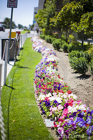 Flowerbed on the street