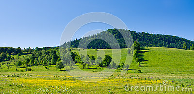 Flowered meadow and hill