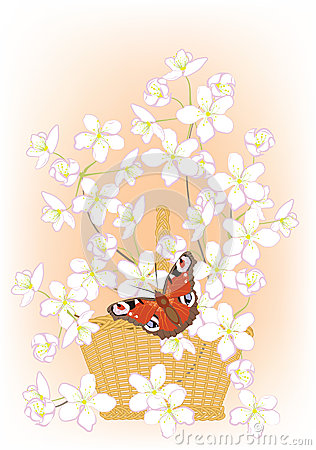 Flowering branches of cherry in a basket