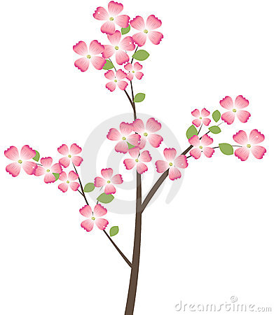 Flowering Dogwood Tree Branch