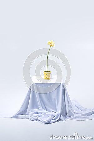 Flowering Gerbera on table