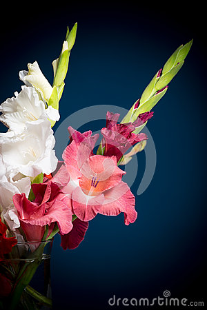 Flowering gladioli