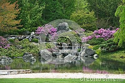 Flowering Japanese garden