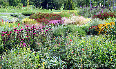 Flowering perennial plants