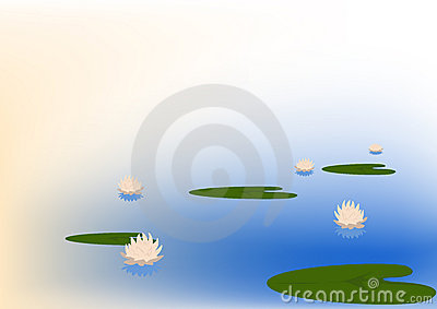 Flowering water lilys