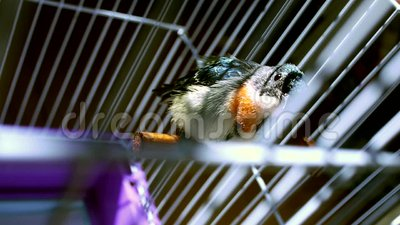 Flowerpecker stock footage