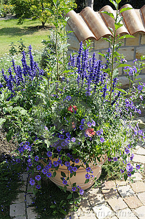 Free Flowerpot Stock Photo - 11285100