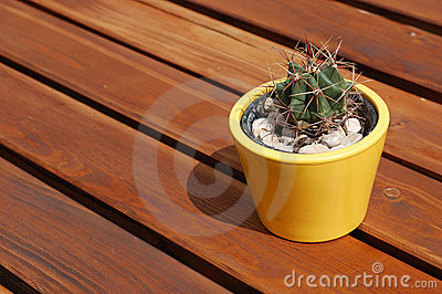 A flowerpot with cactus on the wooden picnic table