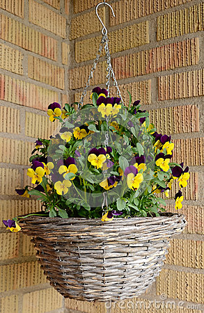 Flowerpot with pansies