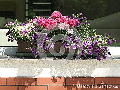 Flowerpot on parapet